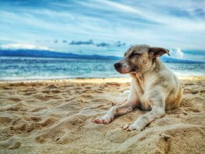 adorable-animal-beach-928449