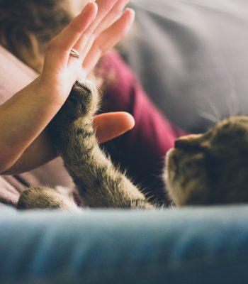 animal-cat-feline-38867